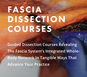 Fascia Training Dissection Course  - August 15
