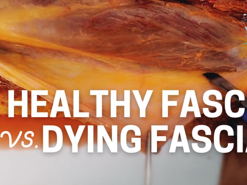 Healthy Fascia vs. Dying Fascia